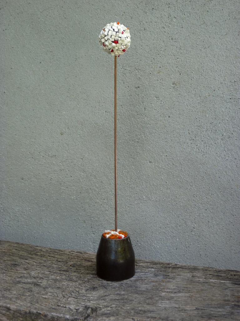 Allium 15